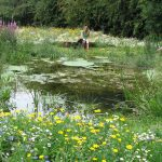 A true wildlife pond, full of life